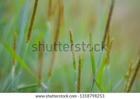 Spring lush weeds #1318798253