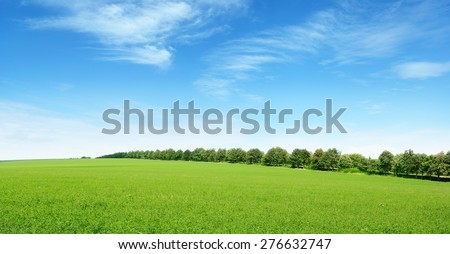 spring meadow and blue sky #276632747