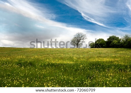 Spring meadow full of yellow flowers