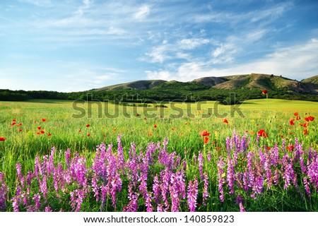 Spring meadow in meadow. Beautiful landscapes.