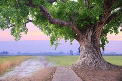 Spring meadow roots of one big tree with fresh green leaves grass field at sunset sky with could landscape background.