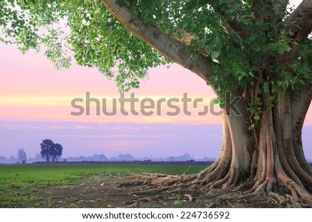 Stock Photo Spring meadow roots of one big tree with fresh green leaves grass field at sunset sky with could landscape background.