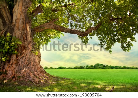 Spring meadow with big tree with fresh green leaves #193005704