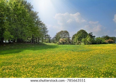 Spring meadow with dandelion  #785663551