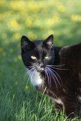 spring meets black rescue cat
