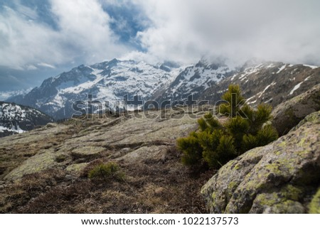 Spring mountain landscape in the Pyrenees with spruce. #1022137573