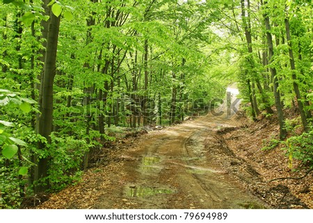 Spring muddy forest road - stock photo