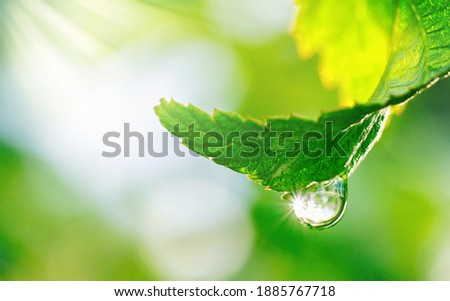 Spring natural background. Big drop of water with sun glare on leaf sparkles in sunlight in beautiful environment, macro. Beautiful artistic image of beauty and purity of nature.