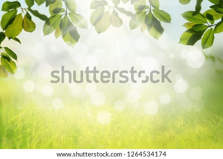 Spring nature background with green tree leaves frame