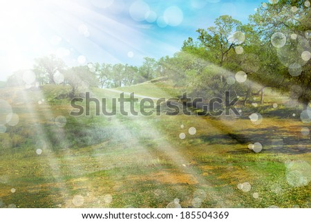 Spring nature background with sunshine / green landscape with sun beams/ Sunny forest early in the morning