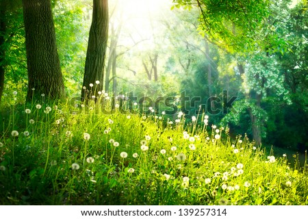 Spring Nature. Beautiful Landscape. Park with Green Grass and Trees. Tranquil Background