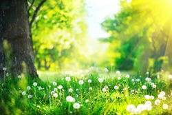 Spring Nature scene. Beautiful Landscape. Park with dandelions, Green Grass, Trees and flowers. Tranquil Background, sunlight. Scenic beauty meadow backdrop