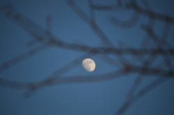 Spring not full moon on the background of still unbroken willow branches