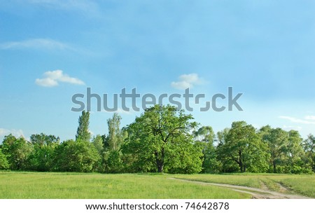 Spring oak tree in green meadow and blue sky #74642878
