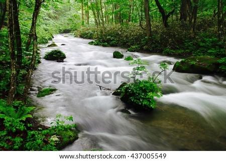 Spring Oirase Valley