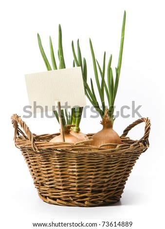 spring onions growing in the basket