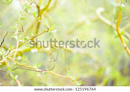 Spring or Summer Abstract Nature Background: leaves with a drops of water and bokeh lights