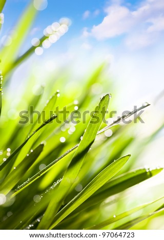 Spring or summer abstract nature background with grass and blue sky