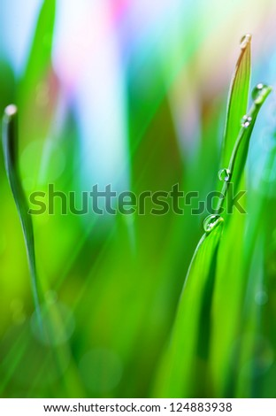 Spring or summer abstract nature background with grass in the blue sky in the back