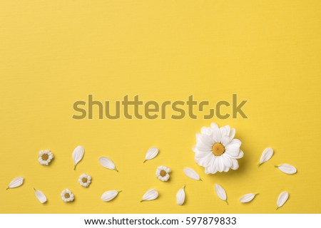 Spring or summer background with copy space for text: chamomiles and petals, white flower with yellow heart. Top view. Flat lay.