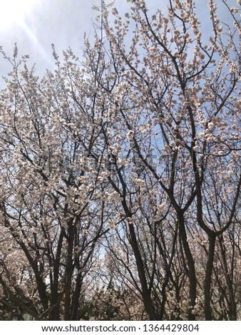 Spring outdoor park #1364429804