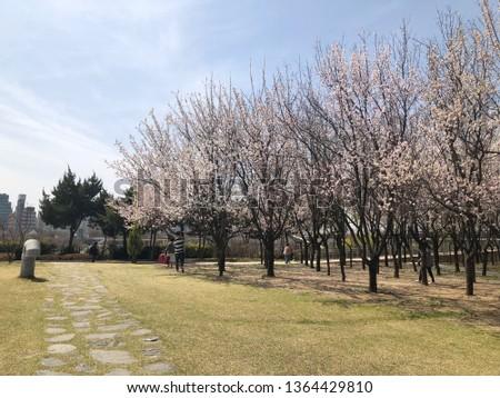 Spring outdoor park #1364429810