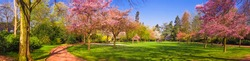 Spring Park landscape. Panoramic view of a park