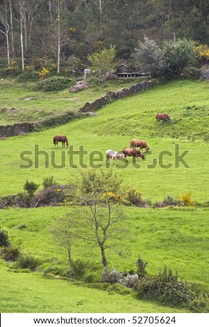 spring pasture, with cows and horses. In the background traditional beehives - stock photo