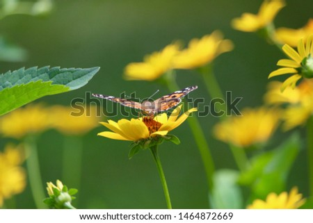 Spring perennial garden with butterfly.  Yellow daisies  #1464872669