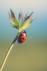 Spring photo. Ladybug on leaf. Summer