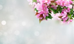 Spring pink cherry tree flowers blooming twig frame over bokeh background banner