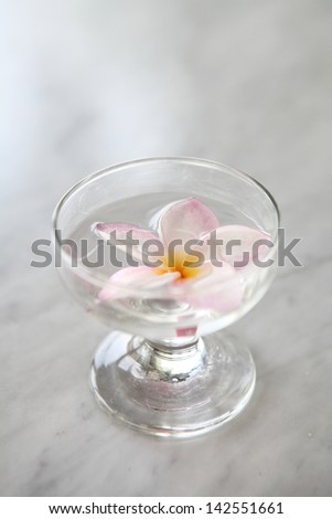 Spring pink flower on water