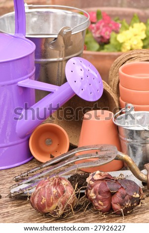 Spring planting bulbs with watering can in rustic setting