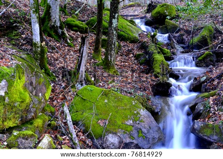 Spring, Rhododendron and stream, Monongahela National Forest, West Virginia, USA