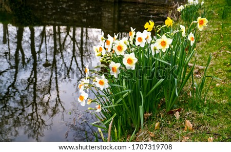 Spring river flowers scene. Flowers water view. Flowers at water