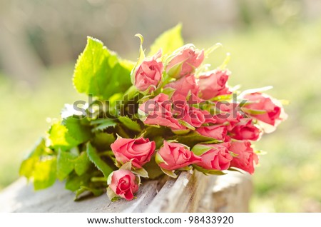 spring rose bunch - stock photo