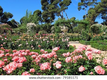 Spring Rose in Madrid Spain Retiro Park