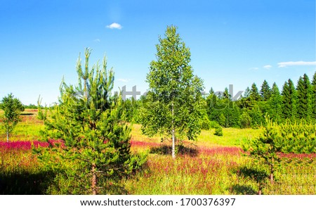 Spring rural nature scene. Forest meadow flowers landscape. Meadow forest trees view