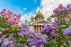 Spring Saint Petersburg. Sights of Russia. St. Isaac's Cathedral surrounded by lilacs. St. Isaac's Cathedral in Saint Petersburg. Russia in sunny weather. Guide to Saint Petersburg. Traveling  Russia