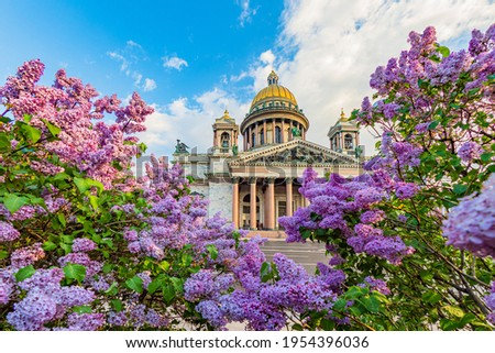 Spring Saint Petersburg. Sights of Russia. St. Isaac's Cathedral surrounded by lilacs. St. Isaac's Cathedral in Saint Petersburg. Russia in sunny weather. Guide to Saint Petersburg. Traveling  Russia Stockfoto ©