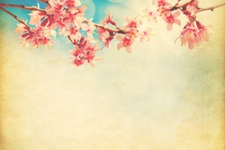 spring sakura pink flower  on sun sky vintage color toned abstract nature  background