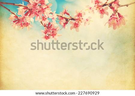 spring sakura pink flower  on...