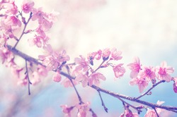spring sakura pink flower with sun sky vintage color toned abstract nature background, instagram filter