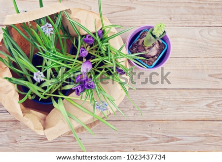 Spring sale concept springtime potted natural spring flowers spring sale concept springtime potted natural spring flowershyacinths crocus muscari mightylinksfo
