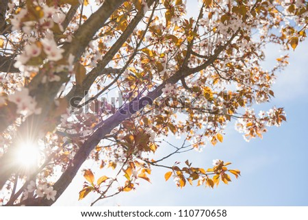 Spring scene with lush tree in bloom and the sun shining on a clear blue sky