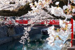 Spring scenery of beautiful cherry blossoms over Suimon-Gawa Canal and a wooden boat parking under a red bridge, in Ogaki (the final destination of the historic Oku no Hosomichi Journey), Gifu, Japan