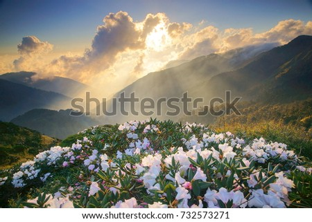 Shutterstock Spring scenery of Hehuan Mountain Main Peak.Sunshine on Azalea's white flowers blossoms(Yushan Rhododendron)by the Trails of Taroko National Park with Crepuscular ray is Taiwan aesthetic sense.Asia.