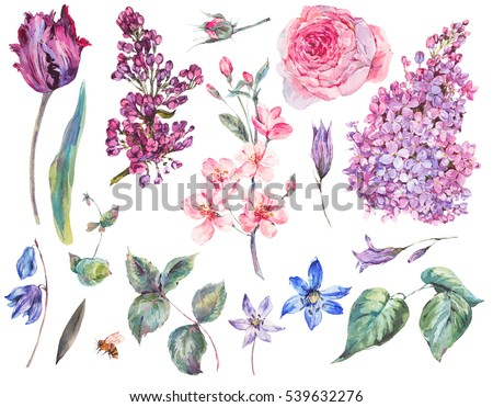 Spring Set vintage watercolor bouquet of pink roses, leaves, blooming branches of peach, lilacs, tulips, scilla, watercolor botanical illustration isolated on white background.
