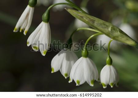Spring Snowflake  #614995202