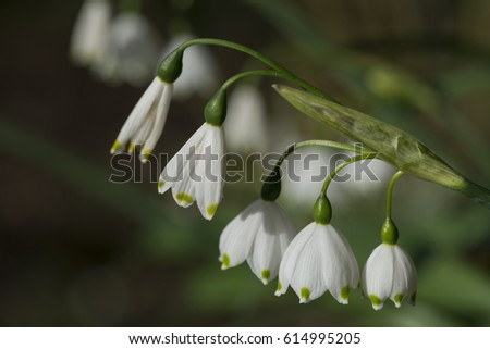 Spring Snowflake  #614995205